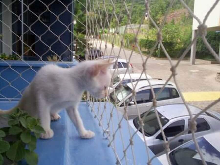 rede-protecao-aves-caes-gatos-grande-vitoria-05