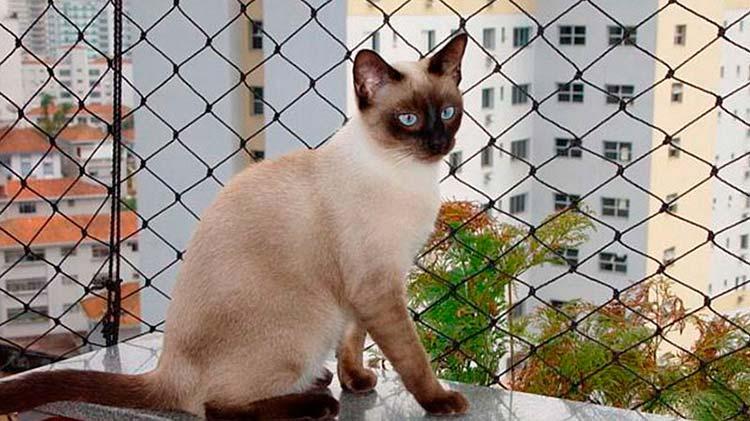 rede-protecao-aves-caes-gatos-grande-vitoria-07