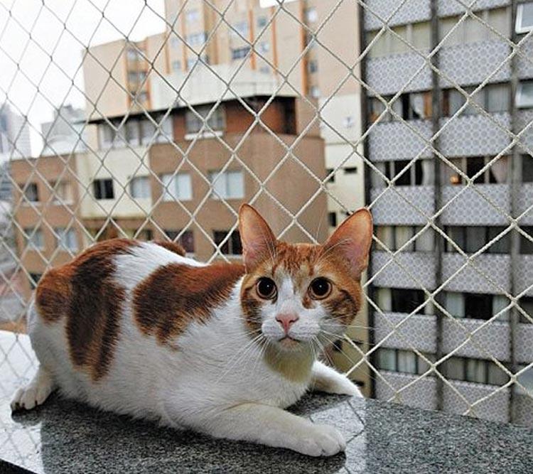rede-protecao-aves-caes-gatos-grande-vitoria-08
